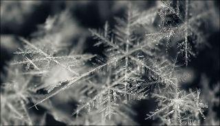 Snowflakes_macro_04