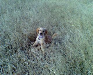 Maisy Meadow